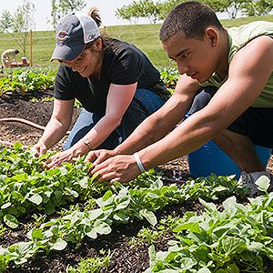 Kraft employees work together with the Chicago Botanic Garden Windy City Harvest program to provide fresh food and a fresh start for people in our communities.