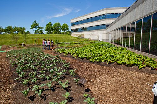 The Makers Garden is another example of how Kraft is earning a place in our community.