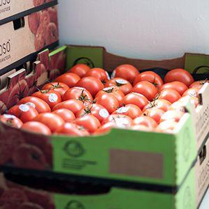 Tomatoes_300x300